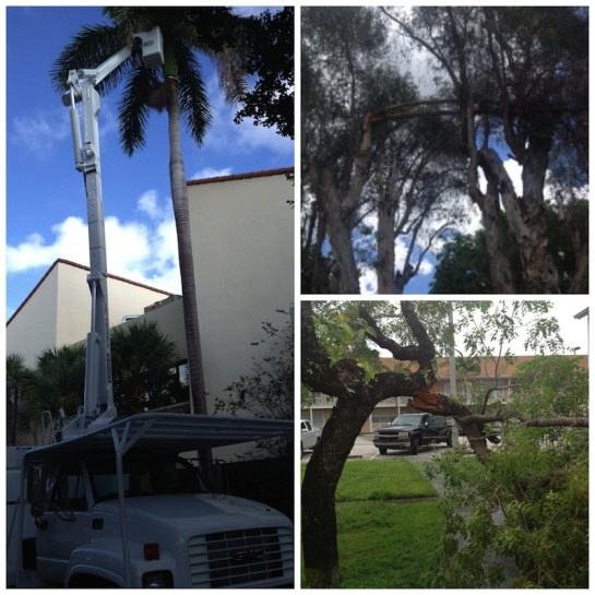 Miami Tree Trimming