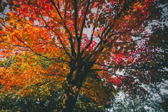 Read this article to learn about fall tree care tips and coral cables tree trimming