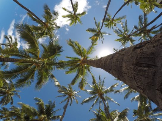 Read this article to find out how to trim trees in Miami