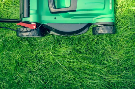 In this article, learn about brush hog mowing in miami and why you still need to brush hog mow in the winter